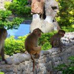 Hòn Lao Nha Trang – Đảo Khỉ