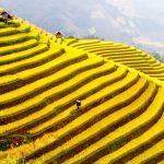 Ruộng Bậc Thang Hoàng Su Phì