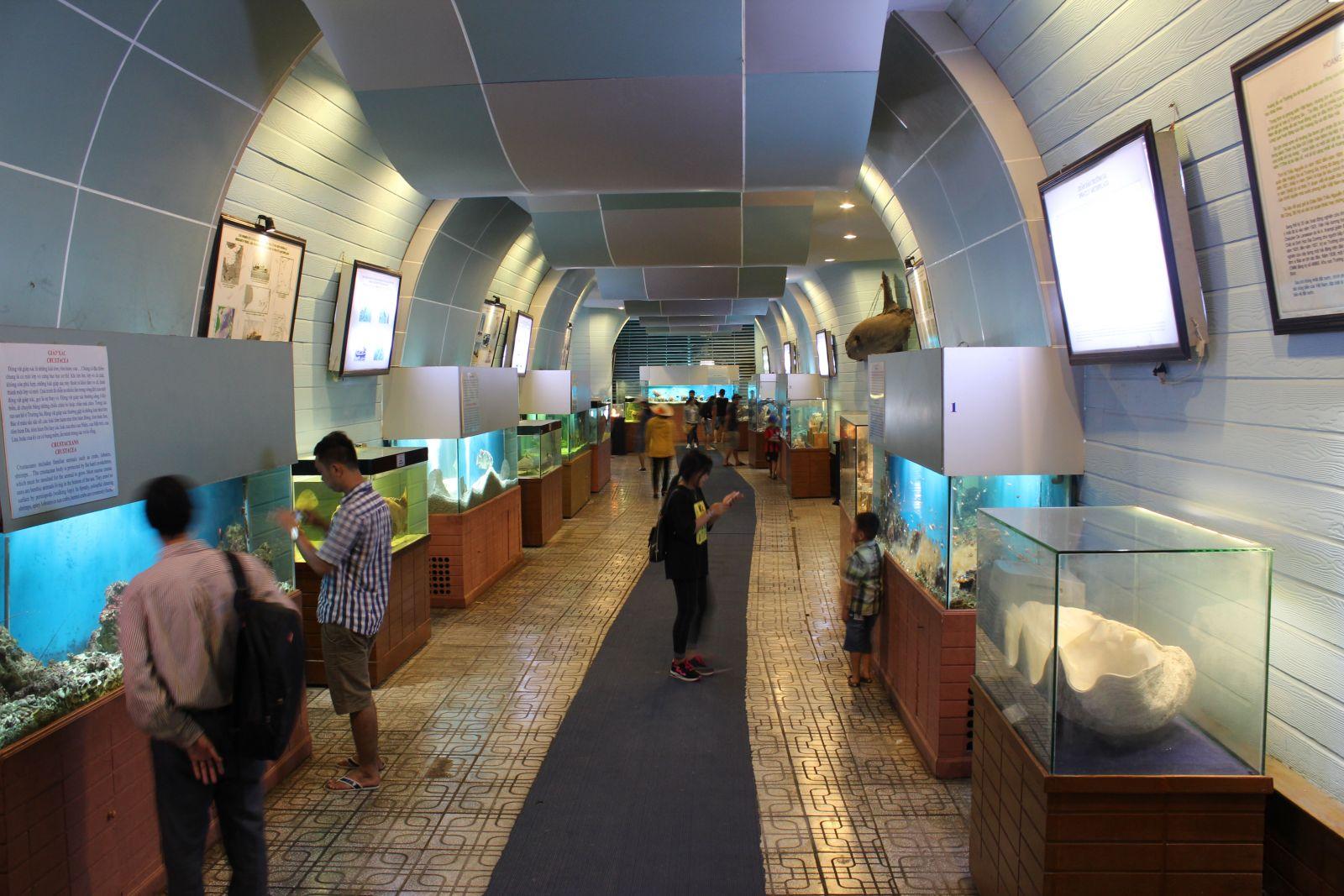Tour Vinpearl Nha Trang 3N2Đ - Viện Hải Dương Học