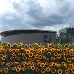 Hành trình khám phá Tây Âu 8N7Đ - Bảo tàng Van Gogh