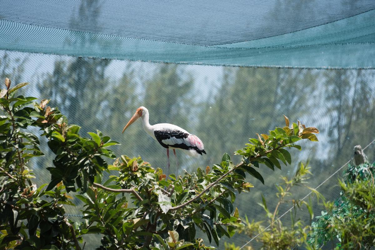 Hoạt động giải trí ở Quy Nhơn - FLC Zoo Safari