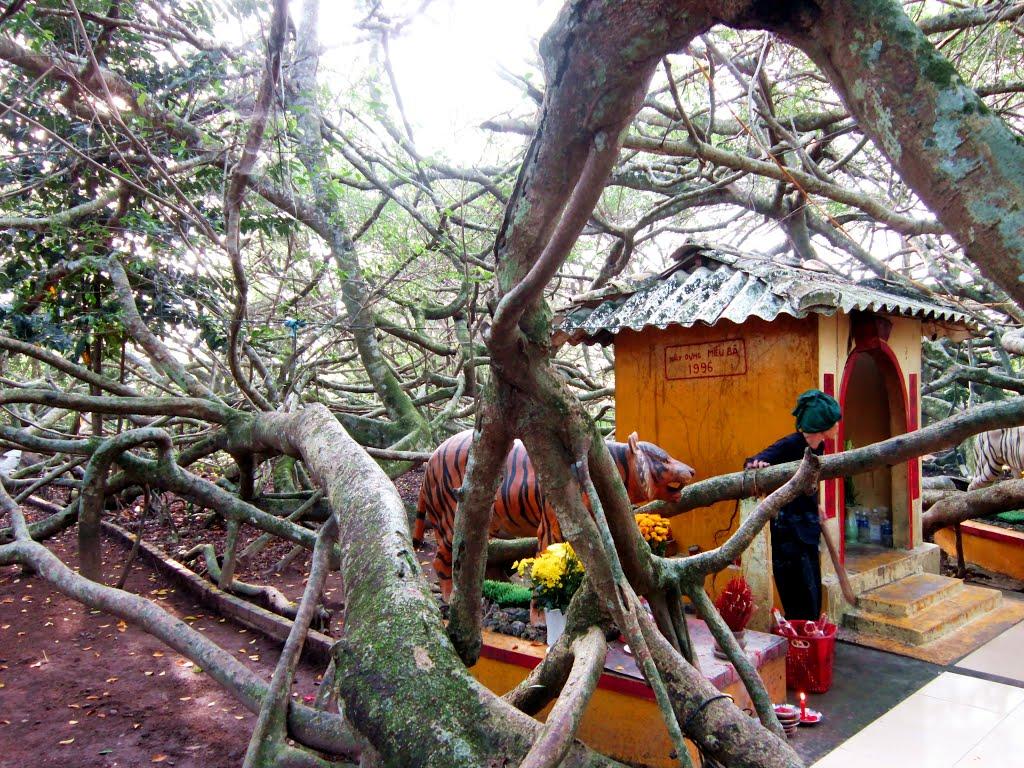 Kinh nghiệm du lịch Cần Thơ - Khu di tích Giàn Gừa