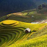 Kinh nghiệm du lịch Hà Giang mùa lúa chín