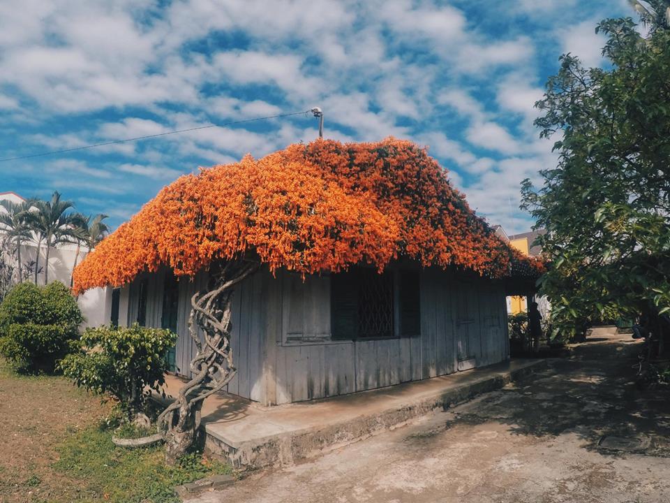 Khám phá Bảo Lộc - Nhà gỗ mái hoa Rạng Đông