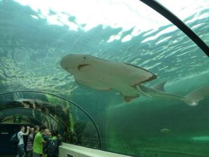 Thủy Cung Sea Life Sydney - Sea Life Sydney Aquarium