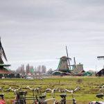 Hành trình khám phá Tây Âu 8N7Đ - Zaanse Schans