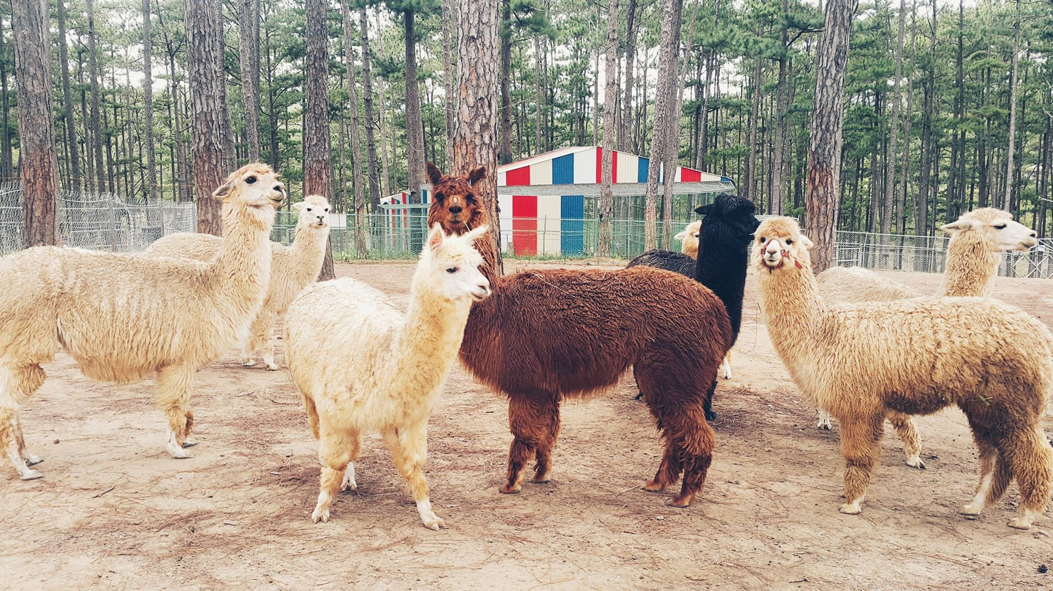 Kinh nghiệm du lịch Vườn thú ZooDoo Đà Lạt