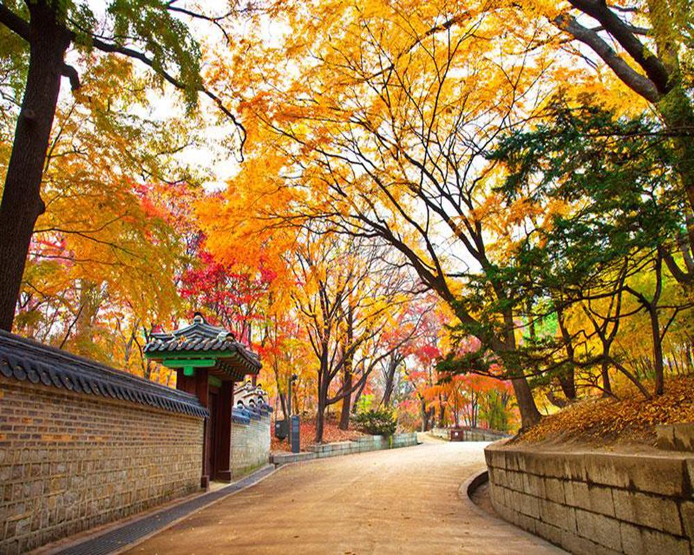Tour Charter Hàn Quốc: Hà Nội – Seoul – Nami – Everland