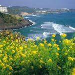 Du lịch Hàn 5 ngày 4 đêm