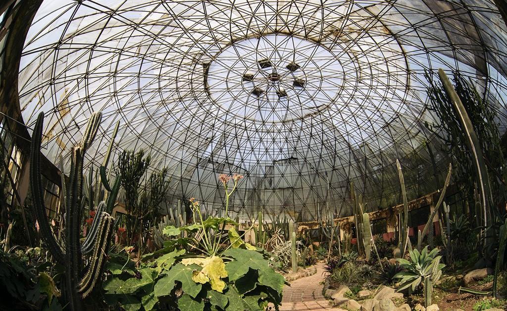 Vườn xương rồng tại Vườn Quốc gia Ba Vì - Điểm đến gần Hà Nội