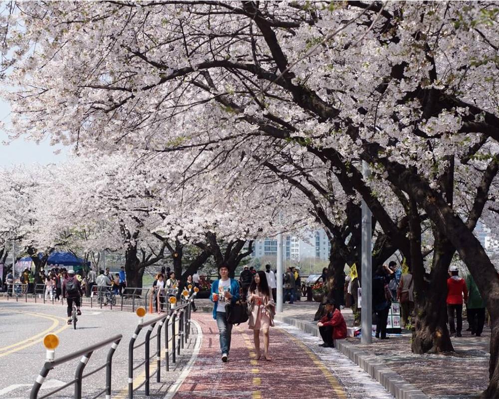 đón tết Kỷ Hợi trên đất Hàn