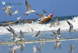 Ghé thăm vườn chim hải âu và thành phố cổ trong tour Thái Lan mới