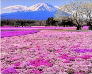 Tour Nhật Bản khuyến mãi