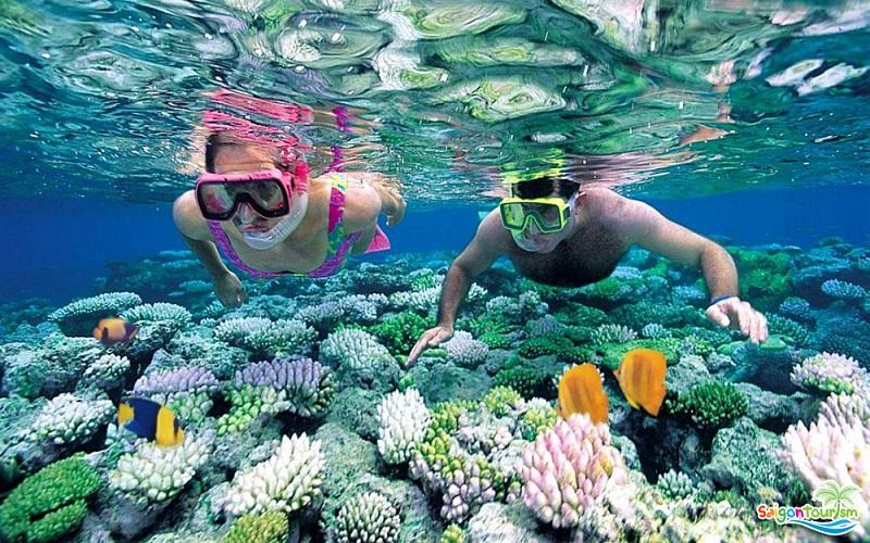 Lặn ngắm san hô tại bãi Đa