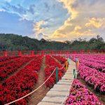 Cánh đồng hoa Đà Lạt: Địa điểm checkin hot nhất