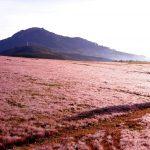 Đồi cỏ hồng Đà Lạt: Địa chỉ và cách đi chi tiết