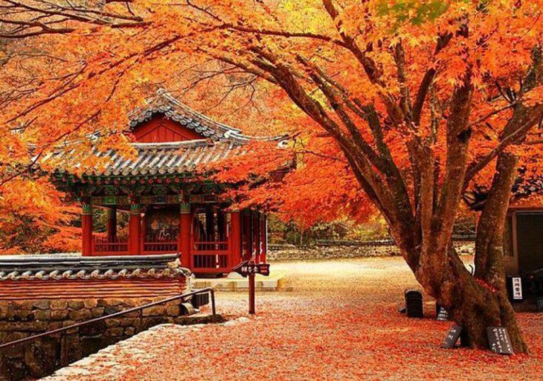 Du lịch Hàn Quốc đi mùa nào đẹp?