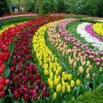 Rừng hoa Đà Lạt có gì hấp dẫn?