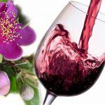 Thưởng thức rượu sim Phú Quốc: Loại rượu vang trứ danh xứ đảo.