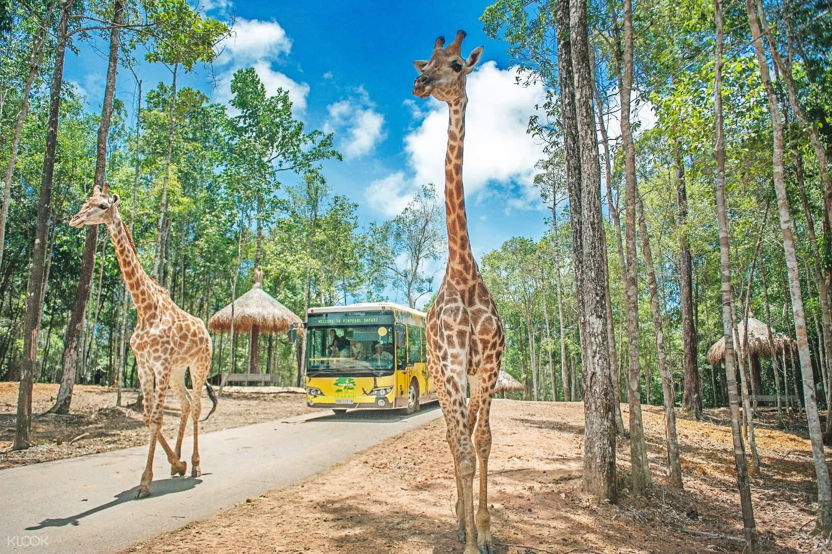 Kinh nghiệm đi Safari Phú Quốc | FOCUS ASIA TRAVEL