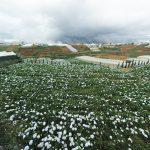 Top 3 vườn hoa cẩm tú cầu Đà Lạt đẹp nhất không nên bỏ lỡ