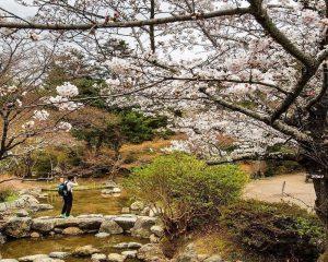 Top 5 điểm ngắm hoa anh đào ở Hokkaido tuyệt đẹp