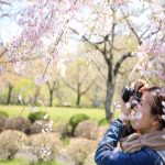 Du lịch Hàn Quốc tháng 4 có gì hấp dẫn