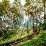 Khám phá rừng thông Yên Minh Hà Giang xanh mướt