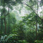 Vườn quốc gia Cúc Phương ở Ninh Bình