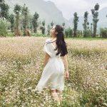 Đi tour Hà Giang, săn hoa tam giác mạch lúc nào là đẹp?