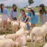 Đồng cừu Suối Nghệ – điểm chụp ảnh siêu hot ở Vũng Tàu