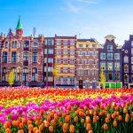 Dịch vụ hồi hương về Việt Nam từ Hà Lan chuyên nghiệp