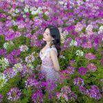 Chiêm ngưỡng vườn hoa khổng lồ trên đỉnh Fansipan